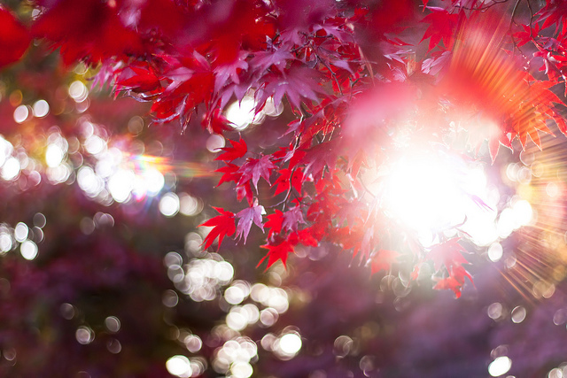 guided meditation lovingkindess
